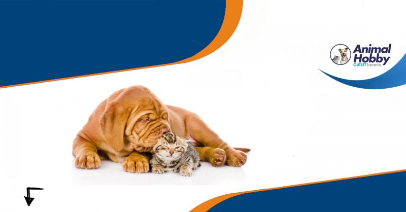 Offerta vendita cibo per animali domestici Taranto - Animal Hobby
